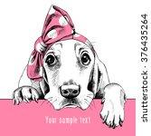 Portrait Of A Basset Hound In...