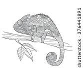 hand drawn chameleon zentangle...   Shutterstock .eps vector #376441891