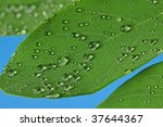 green leaves with raindrops - stock photo