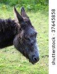 donkey on a green grass... | Shutterstock . vector #37645858