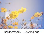 cosmos flowers retro filter... | Shutterstock . vector #376461205