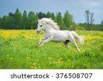 Beautiful White Shetland Pony...
