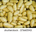 New Potatoes Harvest Close Up...