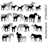Stock vector silhouettes of horses mares and foals 376628017