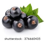 Black Currant With Leaves...