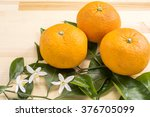 bitter summer orange fruit and... | Shutterstock . vector #376705099