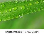 green grass with raindrops macro - stock photo