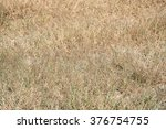 Field Of Weathered Dry Grass