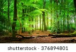 Spring Forest Veluwe  The...