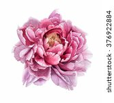 flowers.peony.watercolor.this... | Shutterstock . vector #376922884