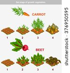 set stage of growth vegetables... | Shutterstock .eps vector #376950595
