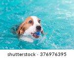 cute little beagle dog swimming ... | Shutterstock . vector #376976395