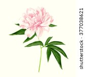 the single flowering light pink ... | Shutterstock .eps vector #377038621