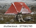 the dog lies next to the red... | Shutterstock . vector #377081785