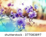 blossom tree over nature... | Shutterstock . vector #377083897