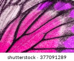 Stock photo macro closeup of butterfly wing texture background pattern 377091289
