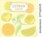 citrus lemons and oranges hand... | Shutterstock .eps vector #377160145