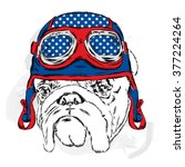 bulldog wearing a helmet. racer.... | Shutterstock .eps vector #377224264