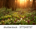 flowering green forest on... | Shutterstock . vector #377243737