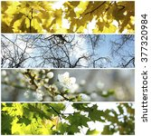 four seasons collage  several... | Shutterstock . vector #377320984