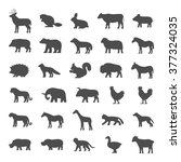 set of domestic and wild... | Shutterstock .eps vector #377324035