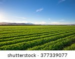 organic farm land crops in... | Shutterstock . vector #377339077