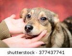 homeless puppy in a shelter for ... | Shutterstock . vector #377437741