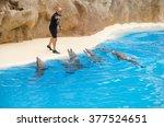 puerto de la cruz  spain   july ... | Shutterstock . vector #377524651