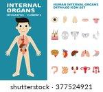 human internal organs detailed... | Shutterstock .eps vector #377524921
