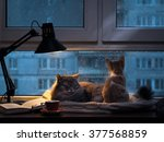 Cats In The Window. Outside ...