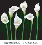 white calla lilies on black... | Shutterstock .eps vector #377631661