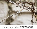 barbed wire | Shutterstock . vector #377716801