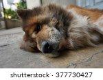 dog | Shutterstock . vector #377730427