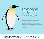 Emperor Penguin. Flat Isolated...