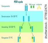 pcr cycle scheme showing dna... | Shutterstock .eps vector #377812474