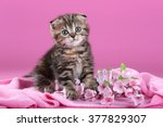Stock photo cute little kitten with flowers on pink background 377829307