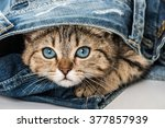 Stock photo sweet kitten 377857939
