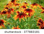 Bright Golden Yellow Flowers O...