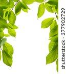 green leaves frame isolated on... | Shutterstock . vector #377902729