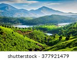 Tea Plantations And...
