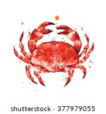 Cooked Crab  Hand Drawn Seafood