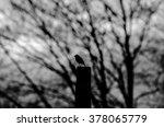 Birdsong Silhouette.