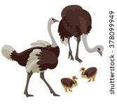 Ostriches With Their Children...