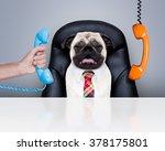 Office Businessman Pug  Dog  A...
