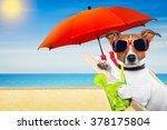 Jack Russell Dog At The Beach...