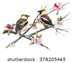 Grosbeaks On A Branch With...