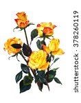 Yellow Roses  Isolated On Whit...