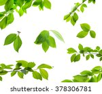 set of green tree leaves and... | Shutterstock . vector #378306781