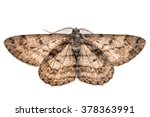 moth with outspread wings... | Shutterstock . vector #378363991