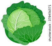 cabbage | Shutterstock .eps vector #378456571